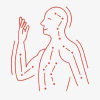 Meridians (Organs' pulse)