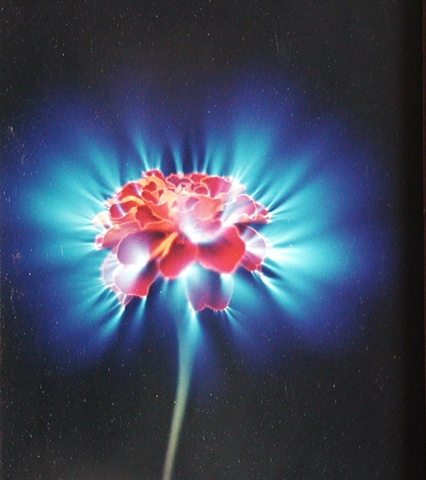 Photos of flowers created by the method of Kirlian
