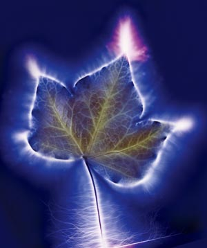 Leaf and Kirlian effect