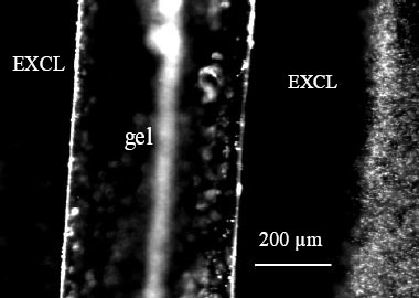 Solute exclusion (EXCL) in the vicinity of polyacrylic acid gel